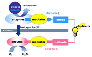 Блок-схема био-батареи