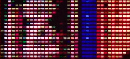 Изображение MEMS-экрана Sharp под микроскопом